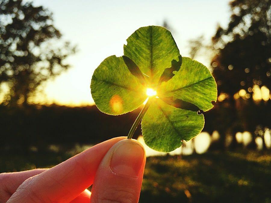 truffle-luck