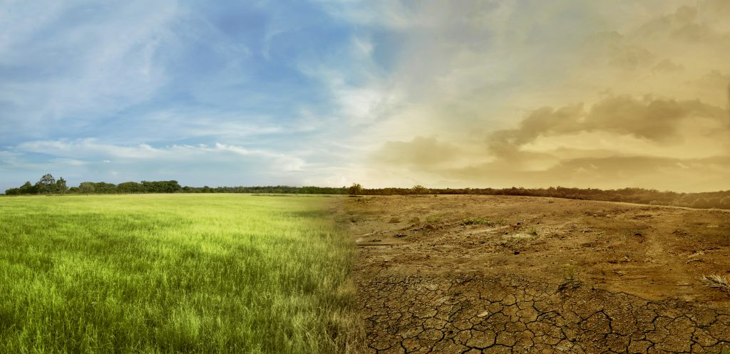 truffle-climate-change